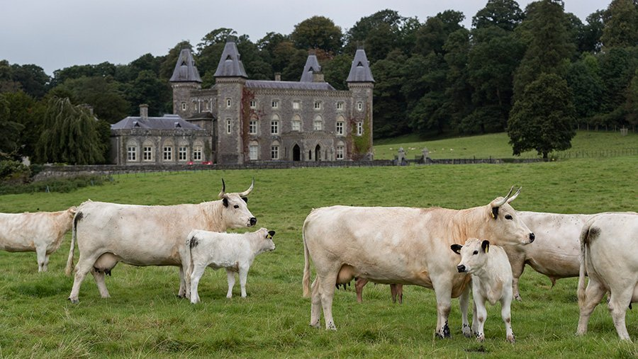 Cows Are Indecorous! A Brief History of Parks
