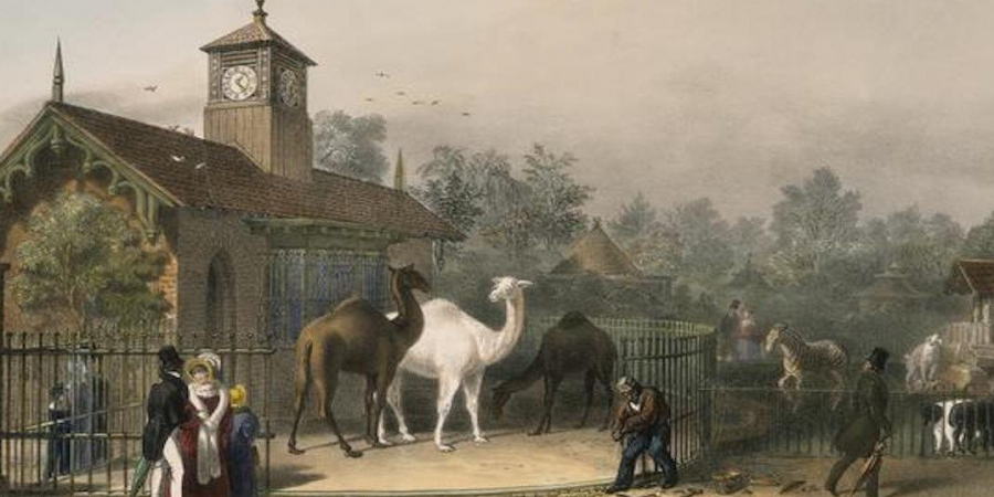 Gibbering and Chattering: A Brief History of Zoos